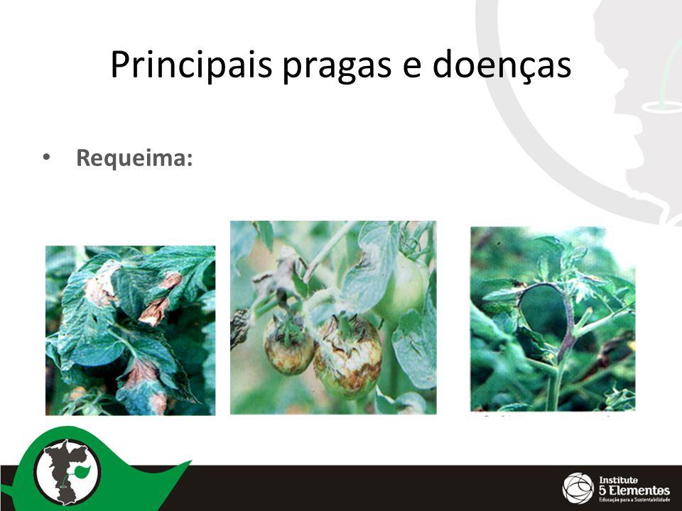 Principais pragas e doenças Requeima: