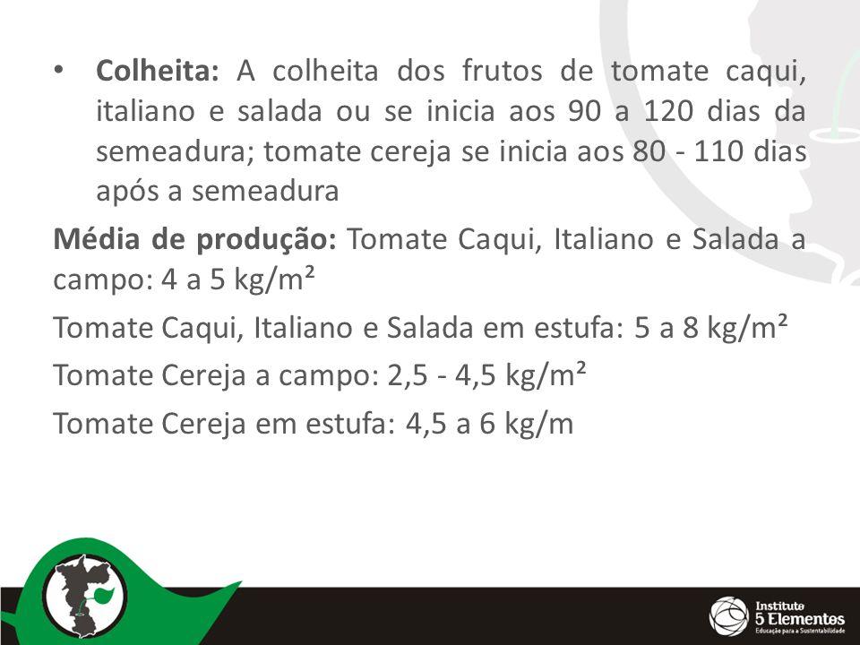 Colheita: A colheita dos frutos de tomate caqui, italiano e salada ou se inicia aos 90 a 120 dias da semeadura; tomate cereja se inicia aos 80 - 110 dias após a semeadura Média de produção: Tomate Caqui, Italiano e Salada a campo: 4 a 5 kg/m² Tomate Caqui, Italiano e Salada em estufa: 5 a 8 kg/m² Tomate Cereja a campo: 2,5 - 4,5 kg/m² Tomate Cereja em estufa: 4,5 a 6 kg/m