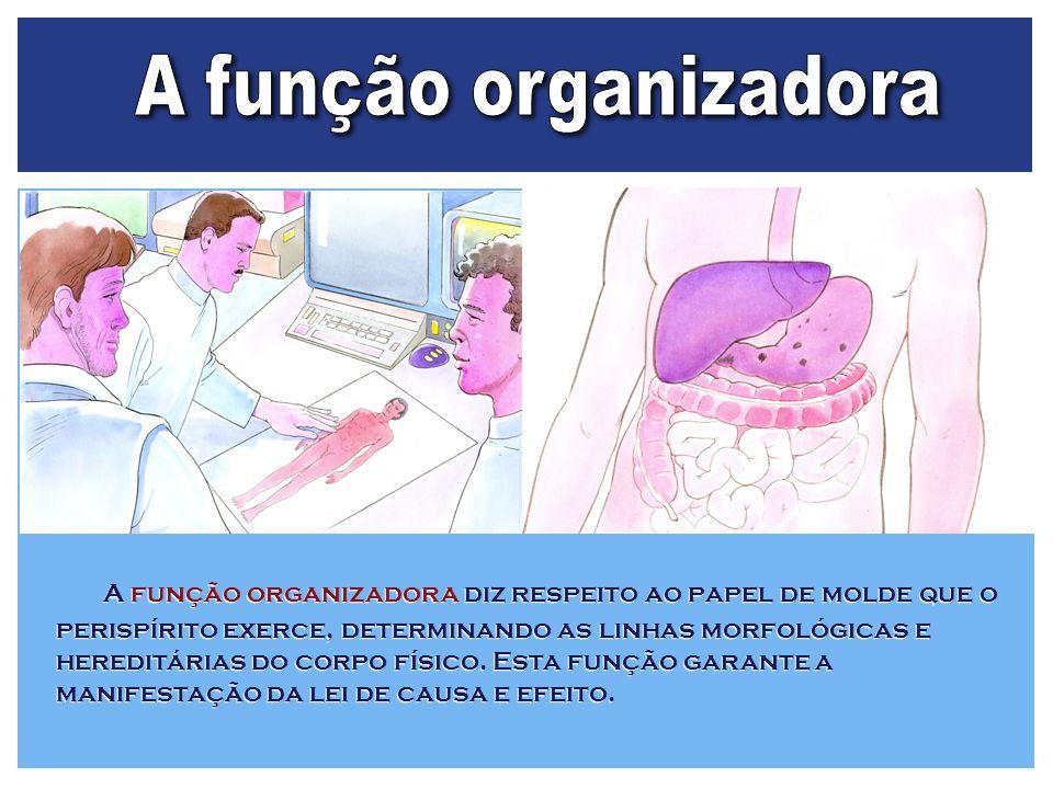 A função organizadora diz respeito ao papel de molde que o perispírito exerce, determinando as linhas morfológicas e hereditárias do corpo físico. Est