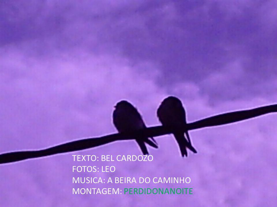 TEXTO: BEL CARDOZO FOTOS: LEO MUSICA: A BEIRA DO CAMINHO MONTAGEM: PERDIDONANOITE