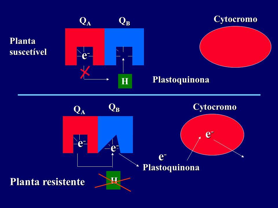 QAQAQAQA e-e-e-e- QBQBQBQBCytocromoPlastoquinona Planta suscetível H QAQAQAQA e-e-e-e- QBQBQBQBCytocromo Plastoquinona Planta resistente H e-e-e-e- e-