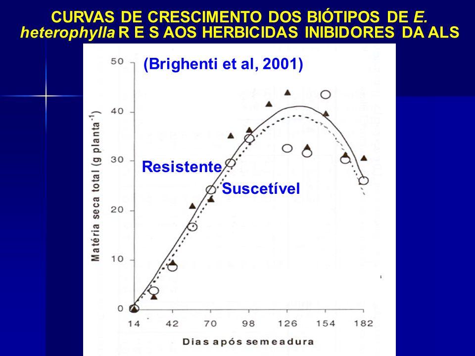 (Brighenti et al, 2001) CURVAS DE CRESCIMENTO DOS BIÓTIPOS DE E. heterophylla R E S AOS HERBICIDAS INIBIDORES DA ALS Suscetível Resistente