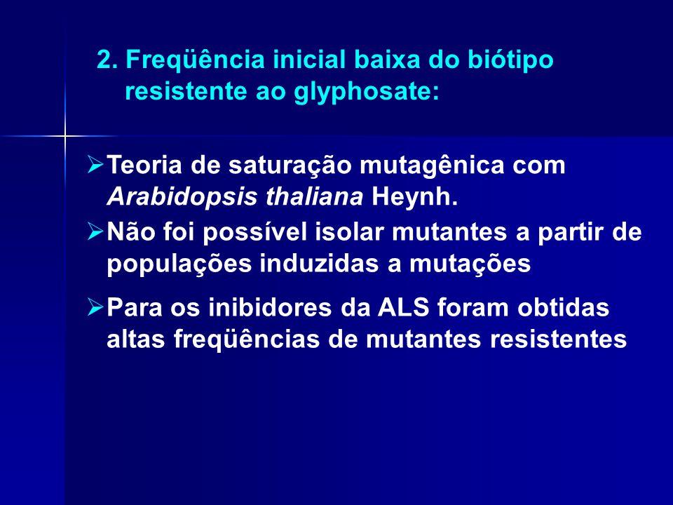 2. Freqüência inicial baixa do biótipo resistente ao glyphosate:  Teoria de saturação mutagênica com Arabidopsis thaliana Heynh.  Não foi possível i