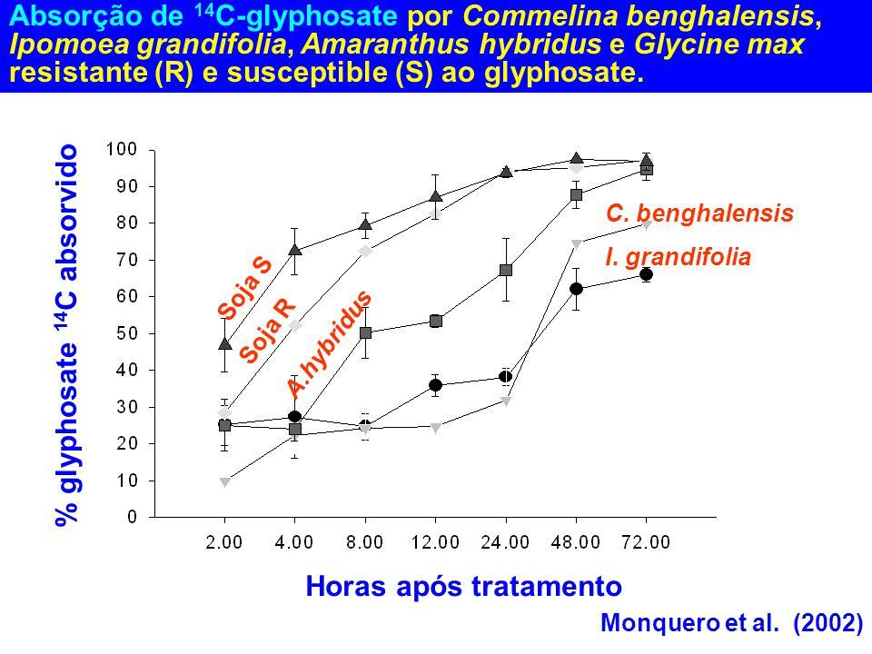 Absorção de 14 C-glyphosate por Commelina benghalensis, Ipomoea grandifolia, Amaranthus hybridus e Glycine max resistante (R) e susceptible (S) ao gly