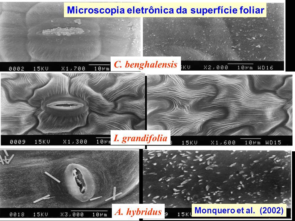 C. benghalensis I. grandifolia A. hybridus Monquero et al. (2002) Microscopia eletrônica da superfície foliar