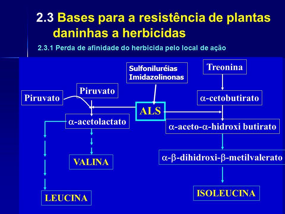 2.3 Bases para a resistência de plantas daninhas a herbicidas 2.3.1 Perda de afinidade do herbicida pelo local de ação ALS  -  -dihidroxi-  -metilvalerato ISOLEUCINA VALINA LEUCINA Treonina  -cetobutirato  -aceto-  -hidroxi butirato Piruvato  -acetolactato Piruvato Sulfoniluréias Imidazolinonas