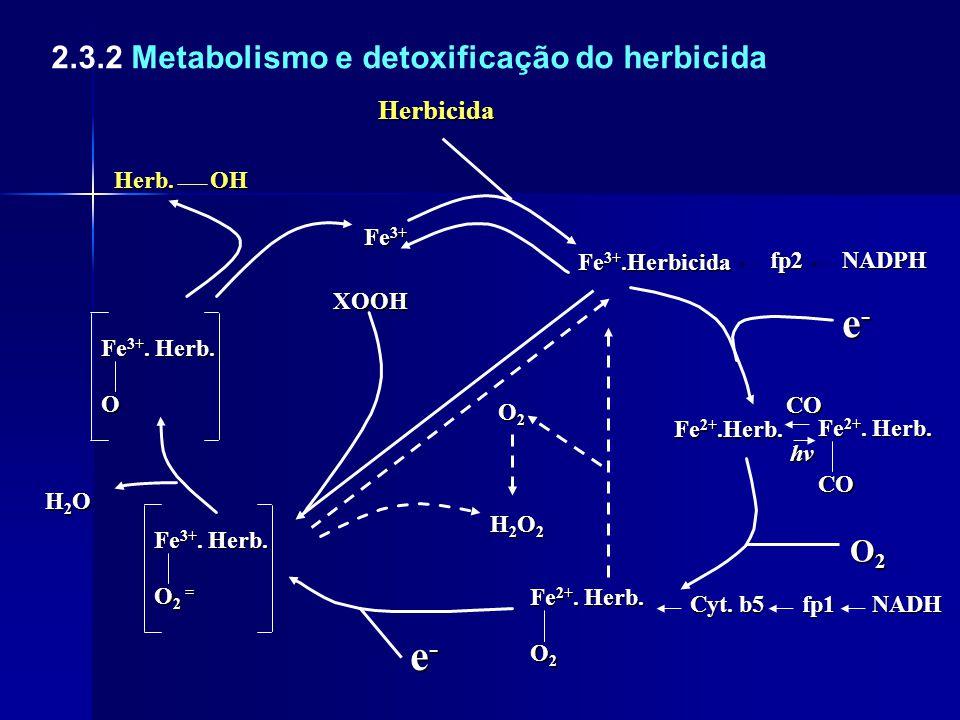 2.3.2 Metabolismo e detoxificação do herbicidaHerbicidaHerb.OH Fe 3+.Herbicida fp2NADPH e-e-e-e- Fe 2+.Herb. CO CO hv O2O2O2O2 O2O2O2O2 Cyt. b5 fp1NAD