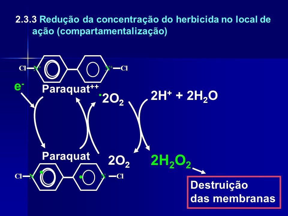 . 2O 2 2O 2 2H 2 O 2 2H + + 2H 2 O Destruição das membranas Cl NN N+N+ N+N+ Paraquat e-e- Paraquat ++.. 2.3.3 Redução da concentração do herbicida no