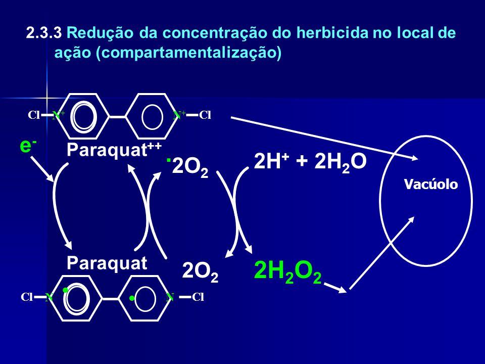 Cl N+N+ N+N+ Paraquat ++ Vacúolo Cl NN e-e- Paraquat... 2O 2 2O 2 2H 2 O 2 2H + + 2H 2 O 2.3.3 Redução da concentração do herbicida no local de ação (