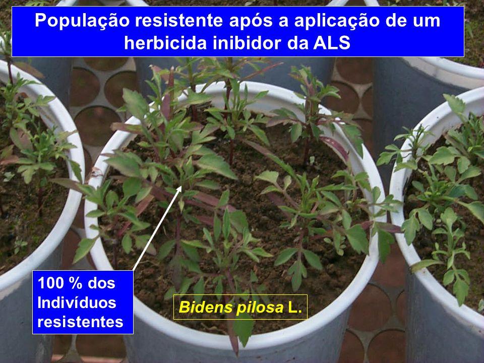 Herbicidas (inib.