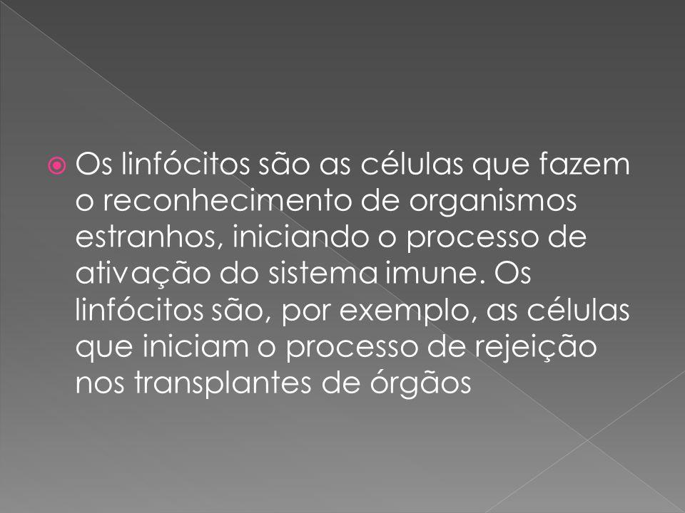  Os linfócitos são as células que fazem o reconhecimento de organismos estranhos, iniciando o processo de ativação do sistema imune. Os linfócitos sã