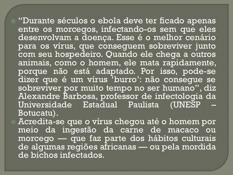 """ """"Durante séculos o ebola deve ter ficado apenas entre os morcegos, infectando-os sem que eles desenvolvam a doença. Esse é o melhor cenário para os"""