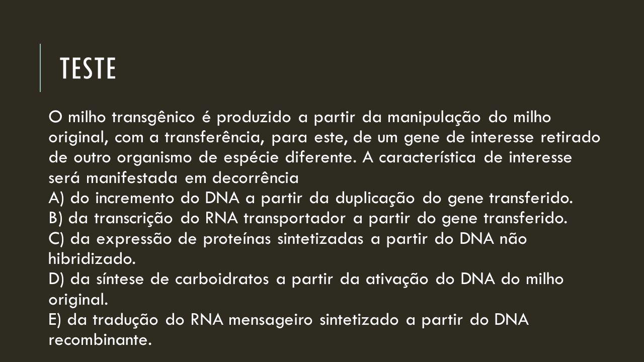 TESTE O milho transgênico é produzido a partir da manipulação do milho original, com a transferência, para este, de um gene de interesse retirado de o