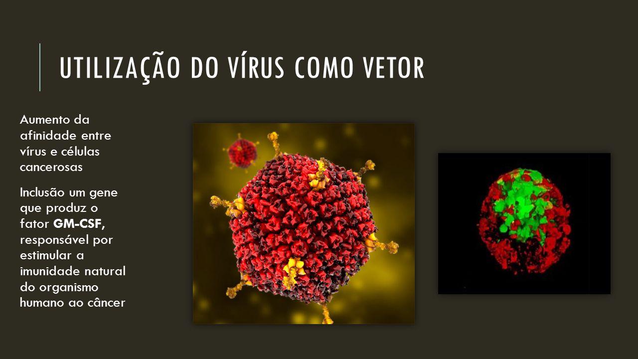 UTILIZAÇÃO DO VÍRUS COMO VETOR Aumento da afinidade entre vírus e células cancerosas Inclusão um gene que produz o fator GM-CSF, responsável por estim