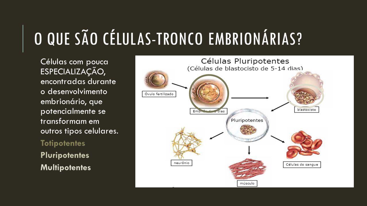 O QUE SÃO CÉLULAS-TRONCO EMBRIONÁRIAS? Células com pouca ESPECIALIZAÇÃO, encontradas durante o desenvolvimento embrionário, que potencialmente se tran
