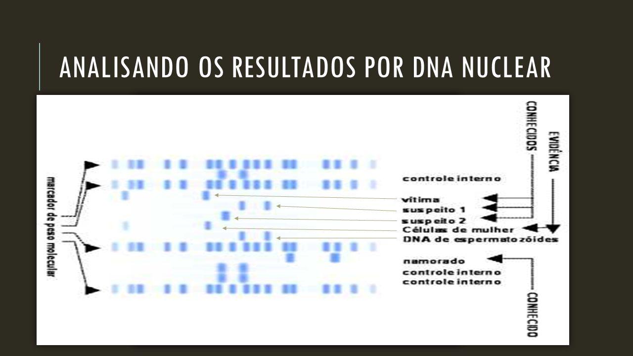 ANALISANDO OS RESULTADOS POR DNA NUCLEAR
