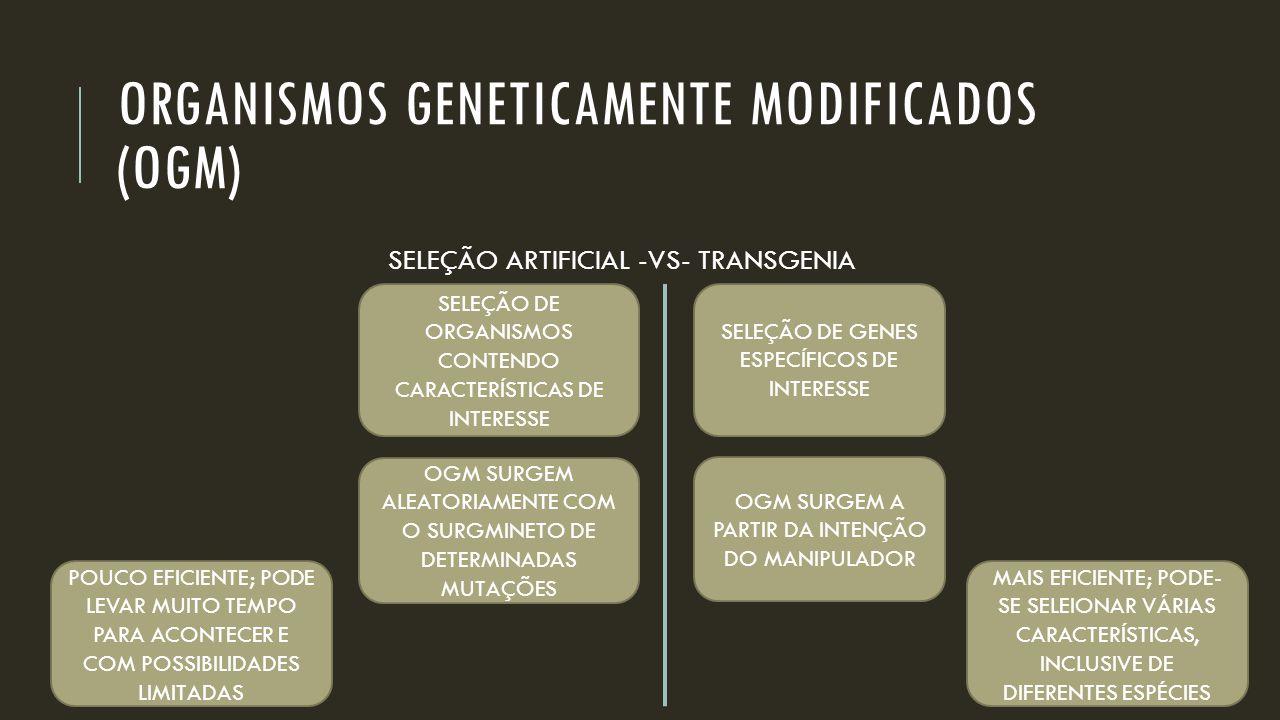 ORGANISMOS GENETICAMENTE MODIFICADOS (OGM) SELEÇÃO ARTIFICIAL -VS- TRANSGENIA SELEÇÃO DE ORGANISMOS CONTENDO CARACTERÍSTICAS DE INTERESSE SELEÇÃO DE G