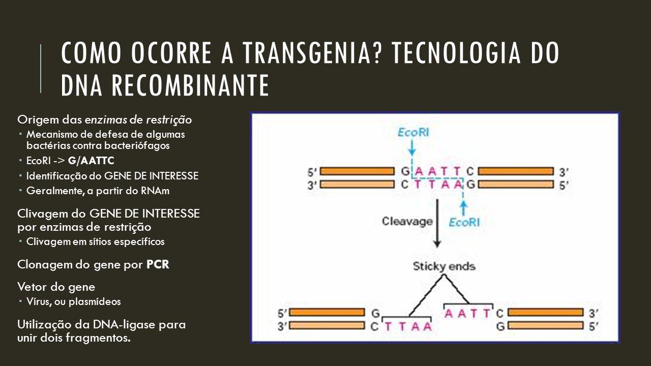 COMO OCORRE A TRANSGENIA? TECNOLOGIA DO DNA RECOMBINANTE Origem das enzimas de restrição  Mecanismo de defesa de algumas bactérias contra bacteriófag