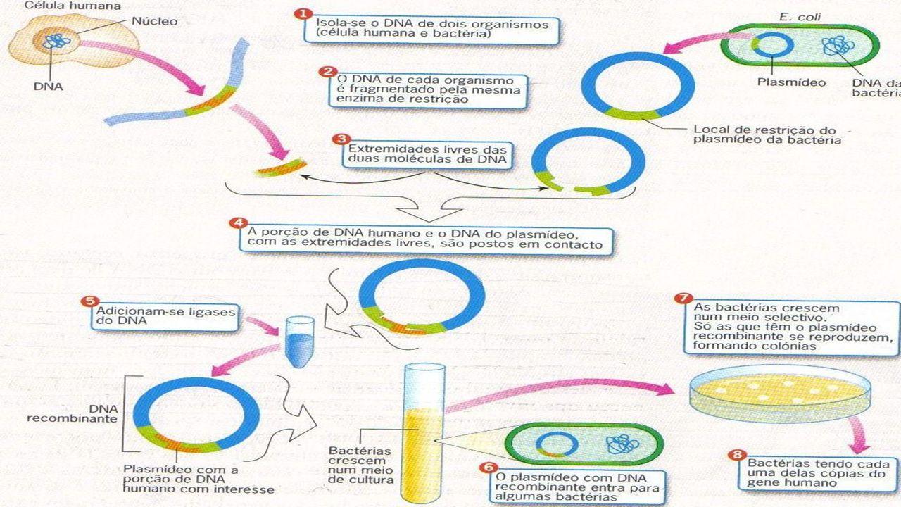 CLONAGEM DE INDIVÍDUOS Segue a mesma linha de procedimento da CLONAGEM TERAPÊUTICA OCORRE REIMPLANTE DO ZIGOTO NA FÊMEA E O DESENVOLVIMENTO É COMPLETO PROBLEMAS: PROBLEMAS: 1.