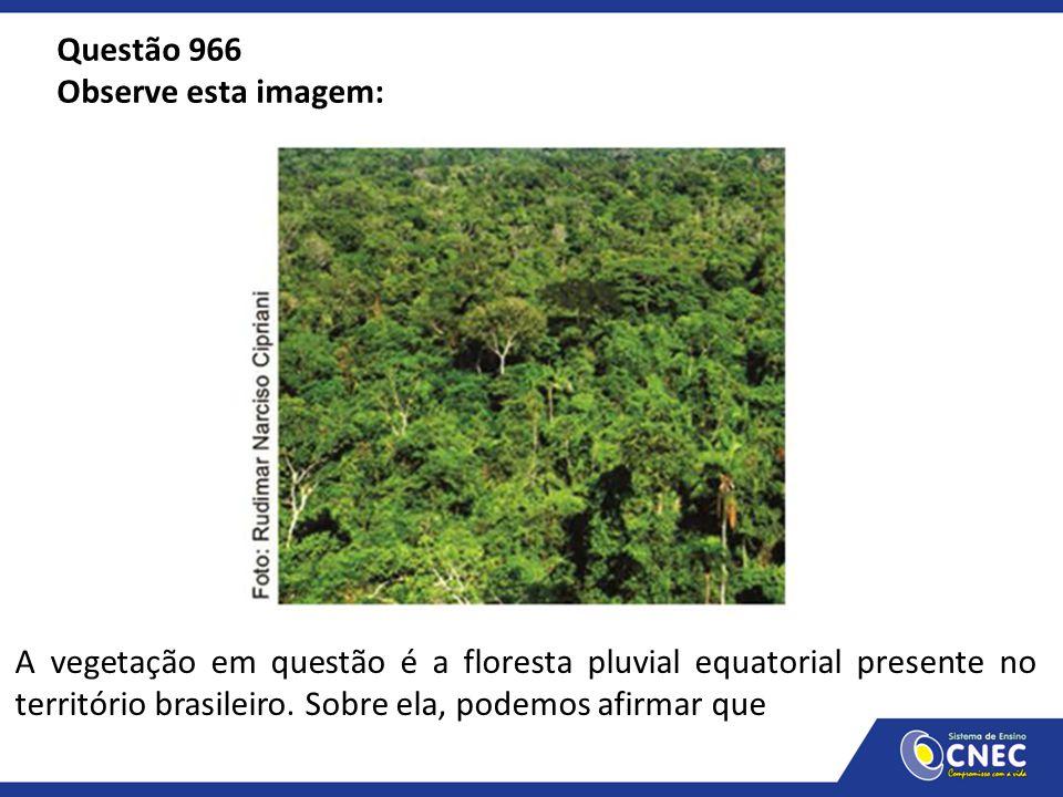 Questão 966 Observe esta imagem: A vegetação em questão é a floresta pluvial equatorial presente no território brasileiro. Sobre ela, podemos afirmar