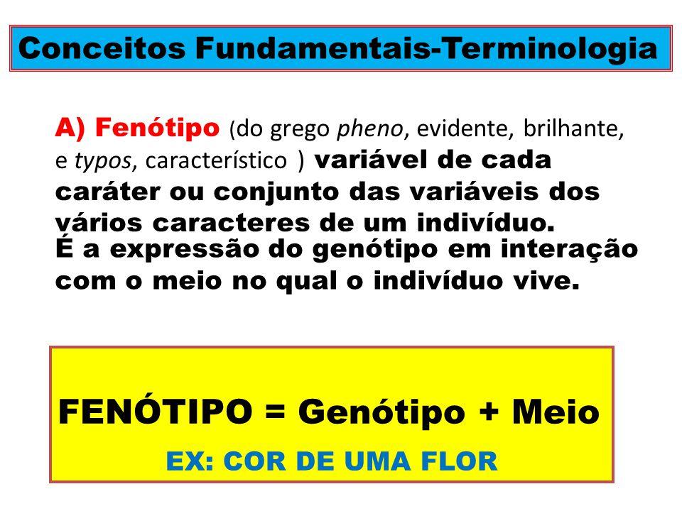 Conceitos Fundamentais-Terminologia A) Fenótipo ( do grego pheno, evidente, brilhante, e typos, característico ) variável de cada caráter ou conjunto das variáveis dos vários caracteres de um indivíduo.
