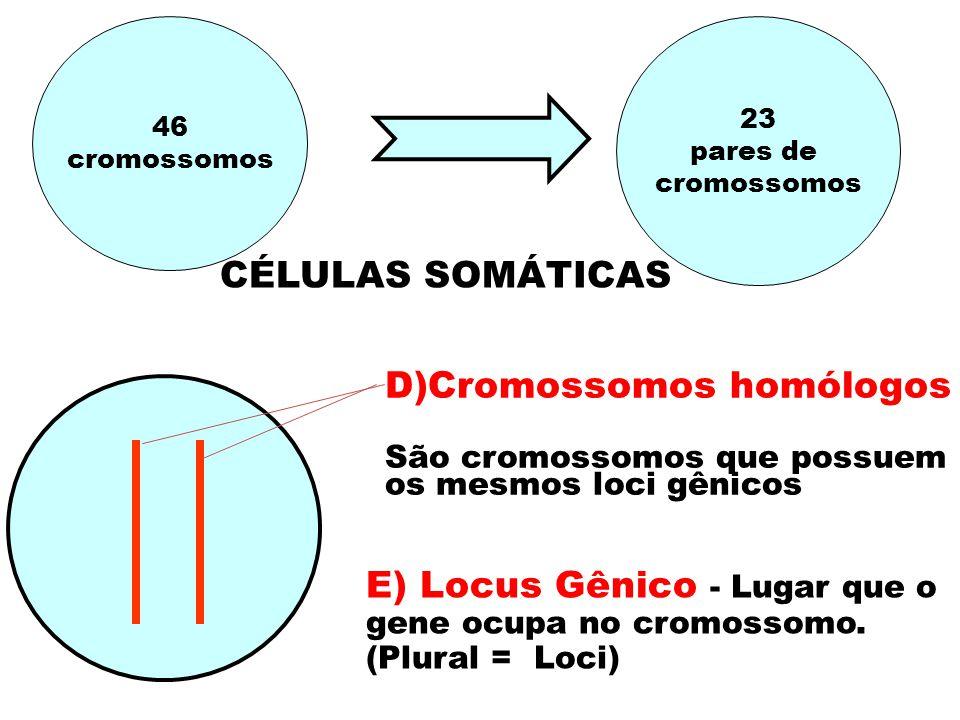 46 cromossomos 23 pares de cromossomos D)Cromossomos homólogos São cromossomos que possuem os mesmos loci gênicos E) Locus Gênico - Lugar que o gene ocupa no cromossomo.