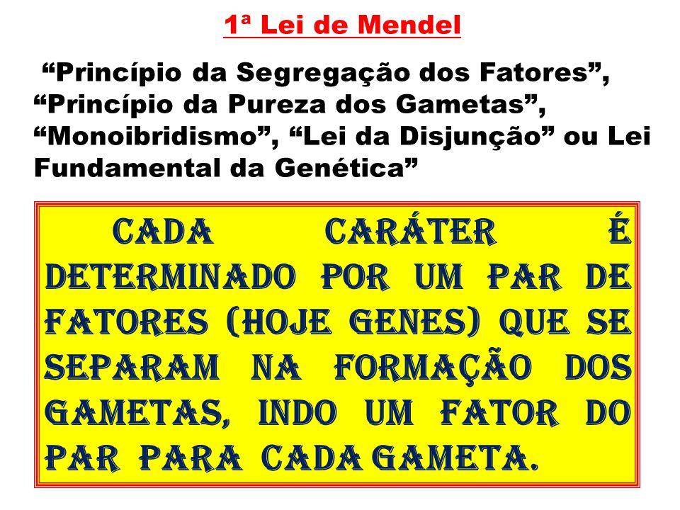 """1ª Lei de Mendel """"Princípio da Segregação dos Fatores"""", """"Princípio da Pureza dos Gametas"""", """"Monoibridismo"""", """"Lei da Disjunção"""" ou Lei Fundamental da G"""