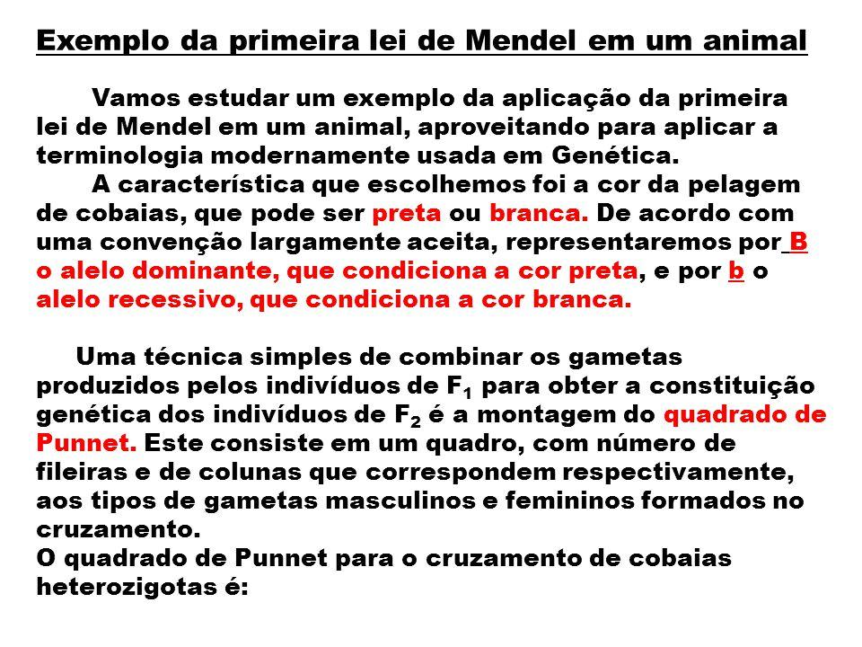 Exemplo da primeira lei de Mendel em um animal Vamos estudar um exemplo da aplicação da primeira lei de Mendel em um animal, aproveitando para aplicar