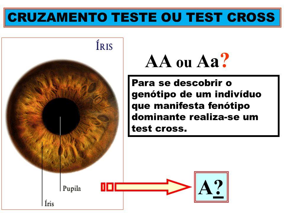 CRUZAMENTO TESTE OU TEST CROSS AA ou Aa ? Para se descobrir o genótipo de um indivíduo que manifesta fenótipo dominante realiza-se um test cross. A?A?
