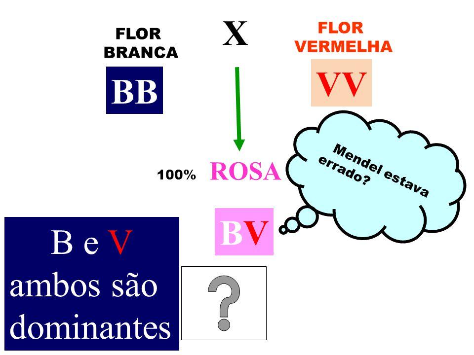 FLOR BRANCA FLOR VERMELHA X 100% ROSA Mendel estava errado? BB VV BVBV B e V ambos são dominantes
