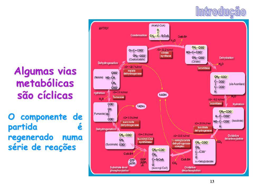 13 Algumas vias metabólicas são cíclicas O componente de partida é regenerado numa série de reações