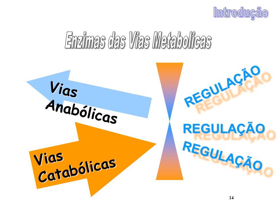 14 Vias Anabólicas Vias Catabólicas REGULAÇÃOREGULAÇÃO REGULAÇÃOREGULAÇÃO REGULAÇÃOREGULAÇÃO