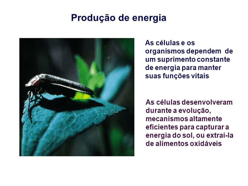 Produção de energia As células e os organismos dependem de um suprimento constante de energia para manter suas funções vitais As células desenvolveram