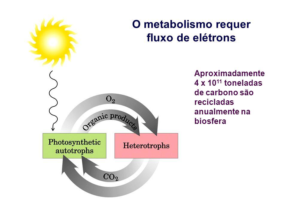 O metabolismo requer fluxo de elétrons Aproximadamente 4 x 10 11 toneladas de carbono são recicladas anualmente na biosfera