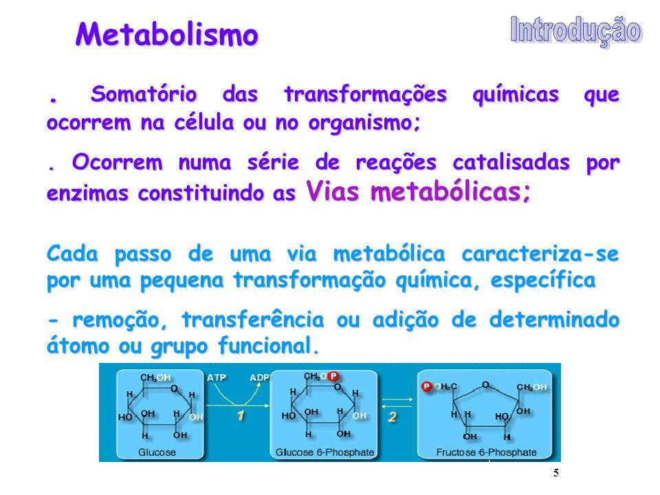 5 Metabolismo. Somatório das transformações químicas que ocorrem na célula ou no organismo;. Ocorrem numa série de reações catalisadas por enzimas con