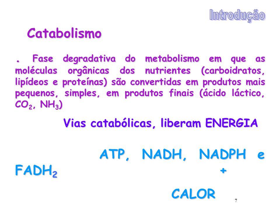 7 Catabolismo. Fase degradativa do metabolismo em que as moléculas orgânicas dos nutrientes (carboidratos, lipídeos e proteínas) são convertidas em pr