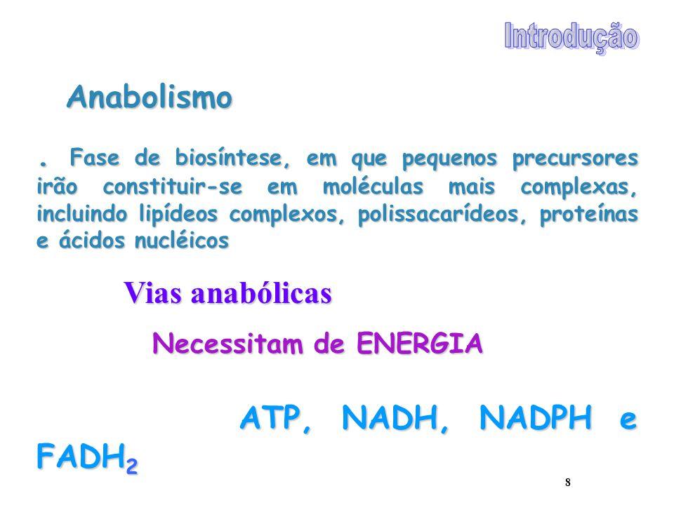 8 Anabolismo. Fase de biosíntese, em que pequenos precursores irão constituir-se em moléculas mais complexas, incluindo lipídeos complexos, polissacar