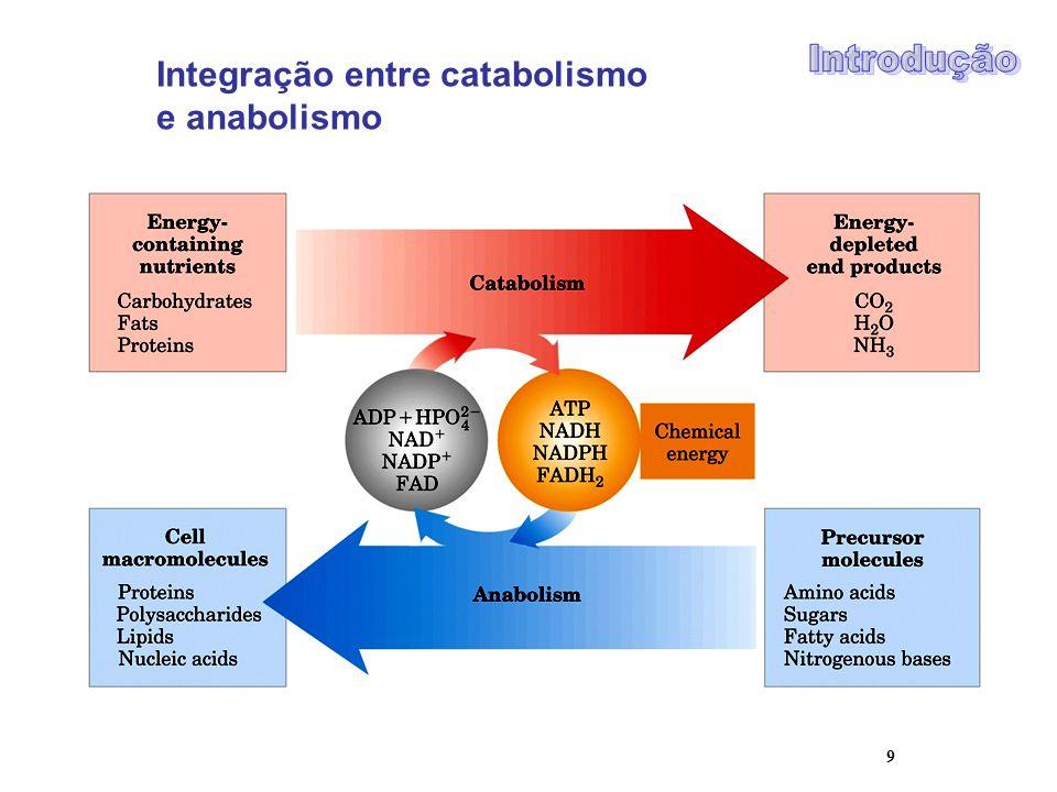 9 Integração entre catabolismo e anabolismo