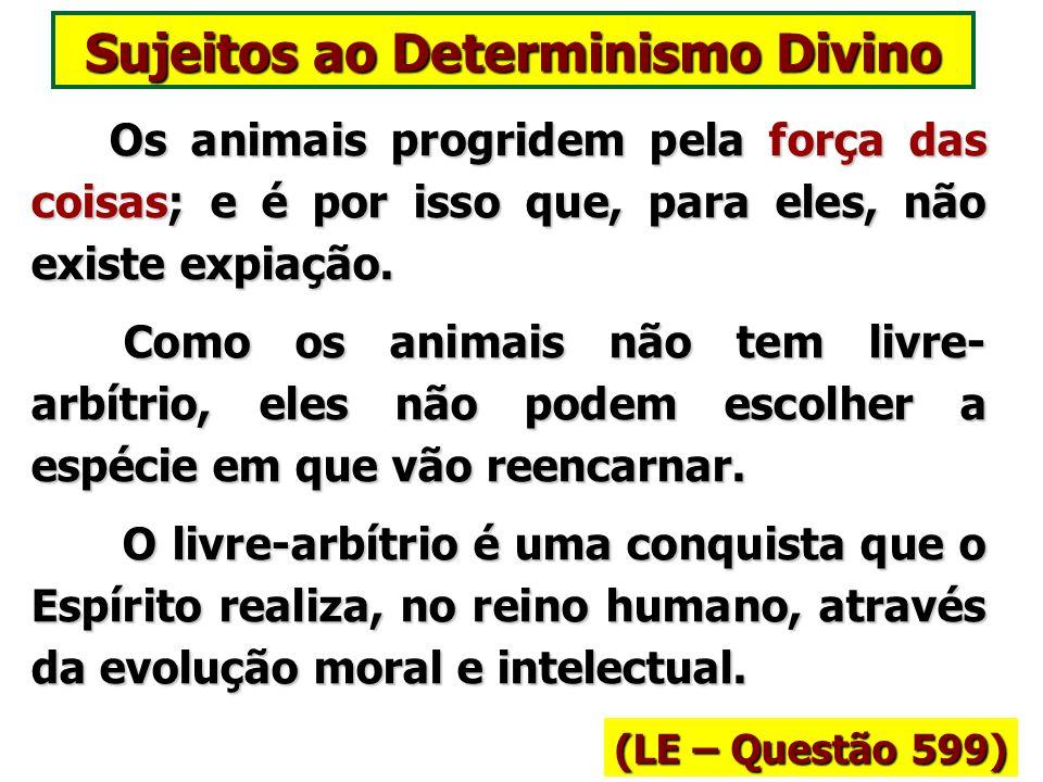 Animais tem livre-arbítrio? (LE – Questão 595) Não são simples máquinas, como supondes, mas sua liberdade de ação é limitada pelas suas necessidades,