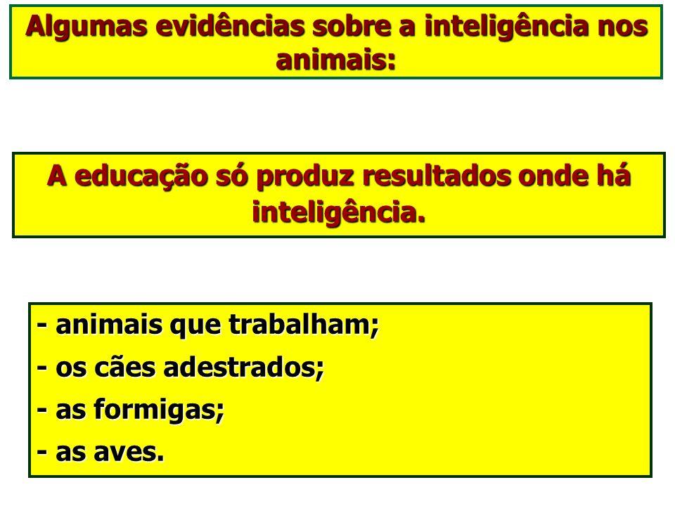 Os animais têm lampejos de inteligência. O animal tem lampejos de inteligência. Está muito distante do pensamento contínuo, que caracteriza o Espírito