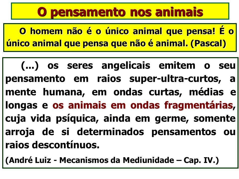 Os animais e a reencarnação reencarnação Todos os seres vivos são dotados de uma individualidade imortal e perfectível, que tem na reencarnação o recu
