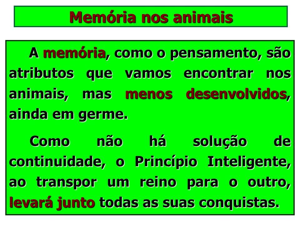 O pensamento nos animais O homem não é o único animal que pensa! É o único animal que pensa que não é animal. (Pascal) O homem não é o único animal qu