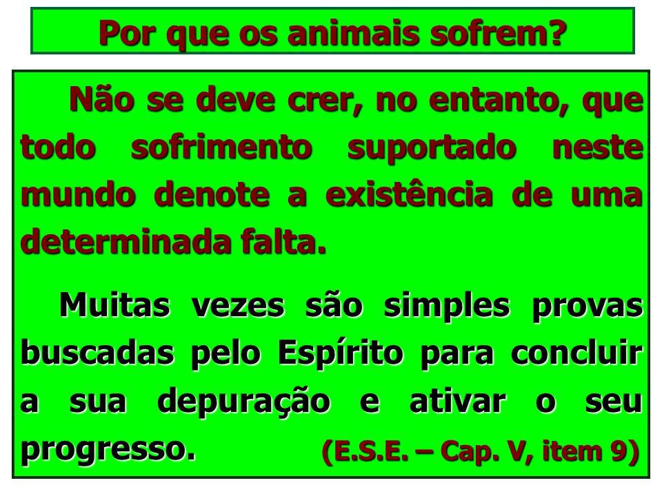 A alma do animal e a do homem são distintas entre si, de tal maneira que a de um não pode animar o corpo criado para o outro. A alma do animal e a do