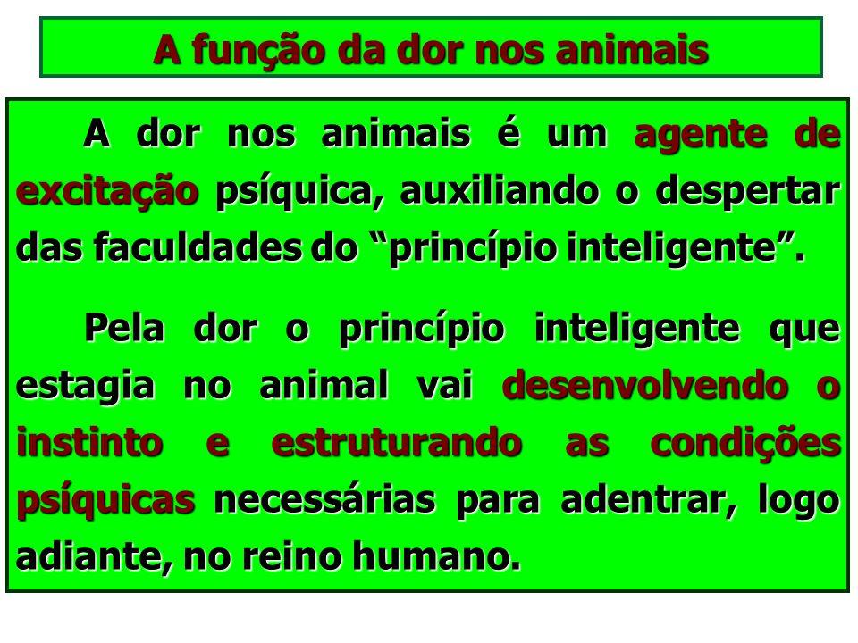 Por que os animais sofrem? Não se deve crer, no entanto, que todo sofrimento suportado neste mundo denote a existência de uma determinada falta. Não s