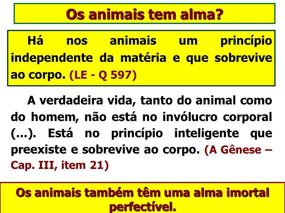 Há nos animais um princípio independente da matéria e que sobrevive ao corpo.