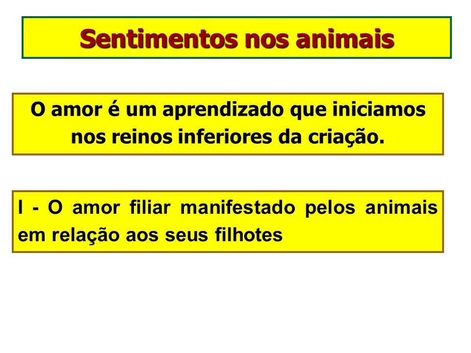 Animais: nossos companheiros de evolução. Deus pôs os animais ao vosso lado como auxiliares para vos alimentarem, para vos vestirem e vos ajudarem. De