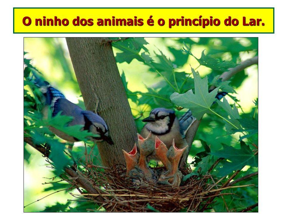 Sentimentos nos animais I - O amor filiar manifestado pelos animais em relação aos seus filhotes O amor é um aprendizado que iniciamos nos reinos infe