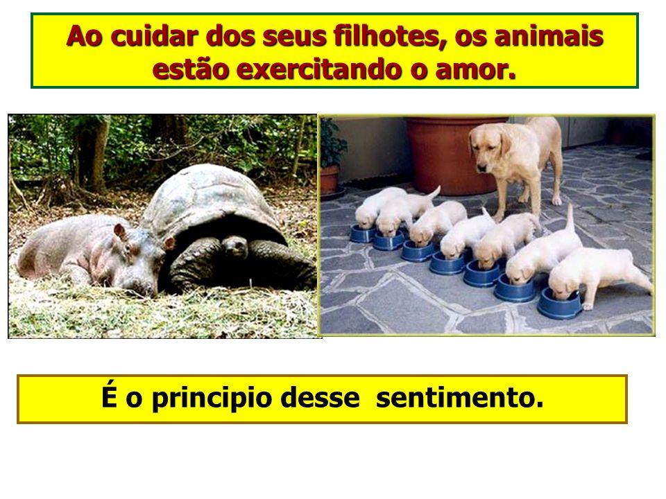 O ninho dos animais é o princípio do Lar.