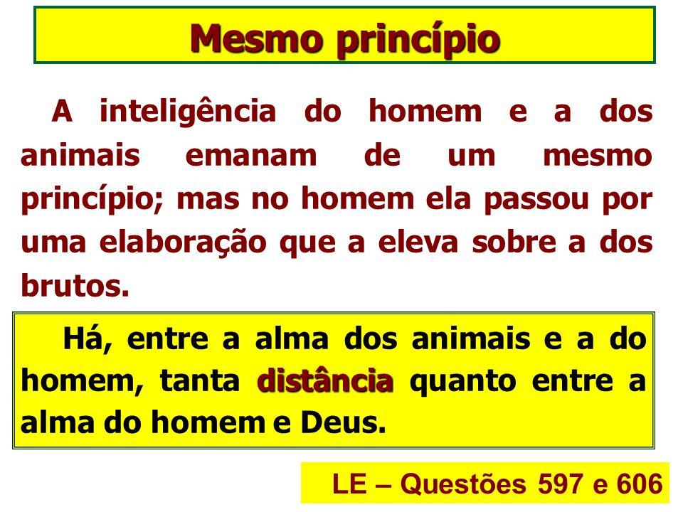 A alma do animal e a do homem são distintas entre si, de tal maneira que a de um não pode animar o corpo criado para o outro.