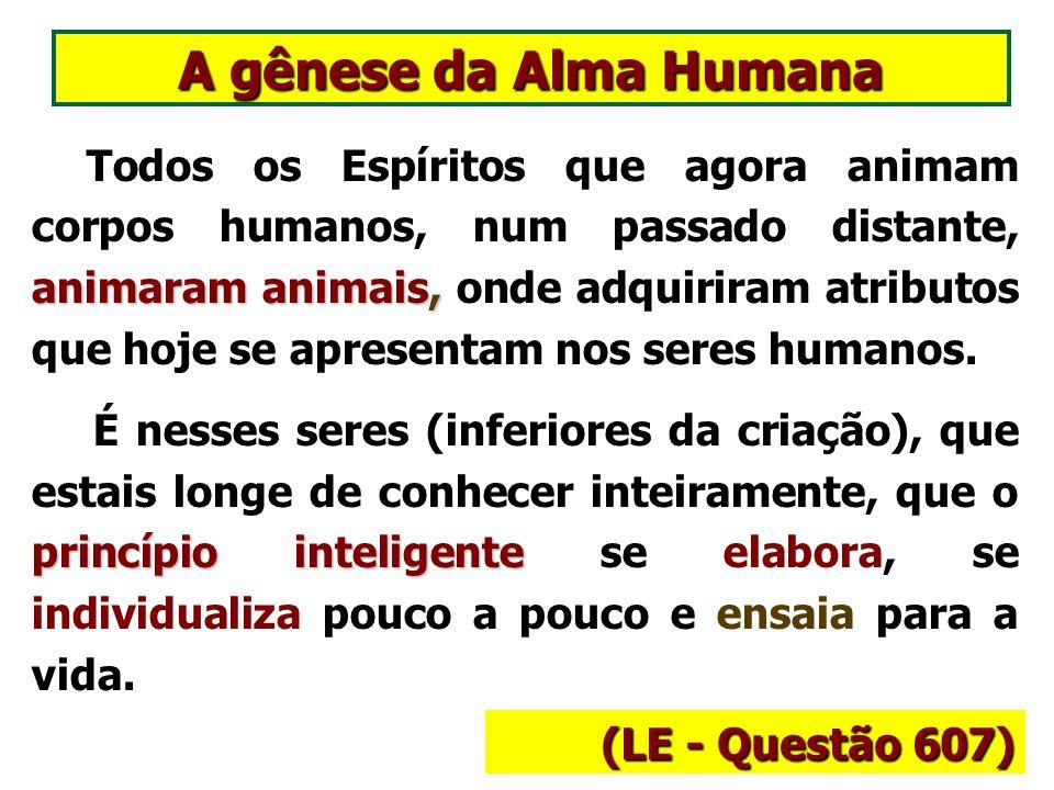 A gênese da Alma Humana animaram animais, Todos os Espíritos que agora animam corpos humanos, num passado distante, animaram animais, onde adquiriram atributos que hoje se apresentam nos seres humanos.